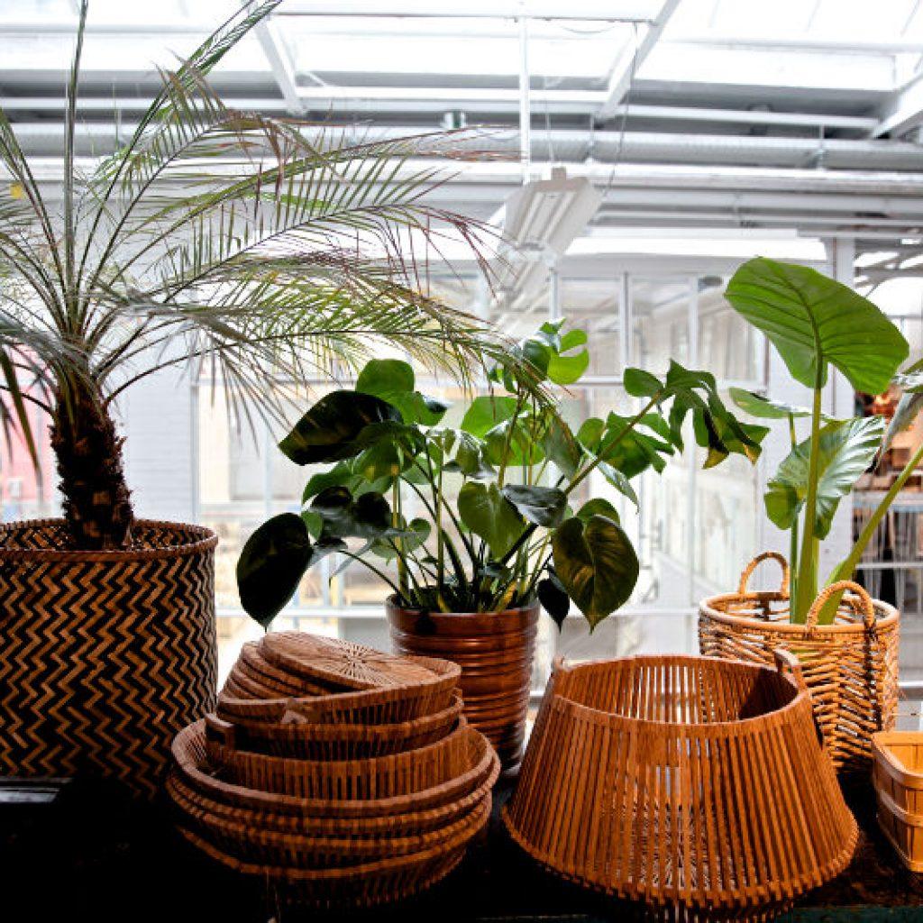 Winkel Piet Hein Eek, Eindhoven, duurzaam materiaal, sustainable, groen wonen, planten in interieur