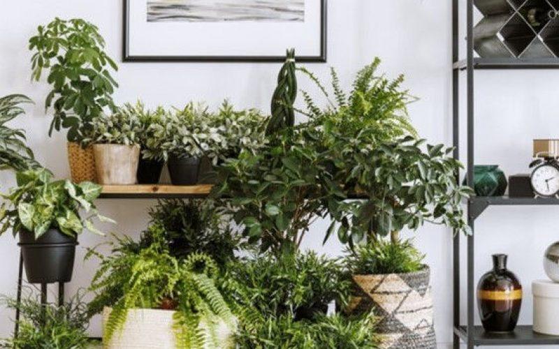 Duurzaam wonen, groen wonen, planten in huis, ecohuis, ecowonen